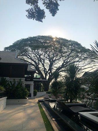 Na Nirand Romantic Boutique Resort: The most beautiful old rain tree