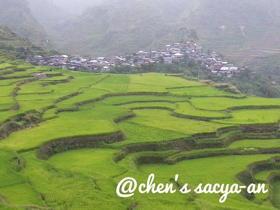 Chen's Sacya-an Home: Maligcong Rice Terraces - best time to visit from April - June when the fields are planted and green in color