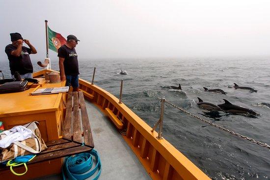 por vezes os golfinhos são tantos que simplesmente desligamos o motor e deixamo-nos a admirá-los