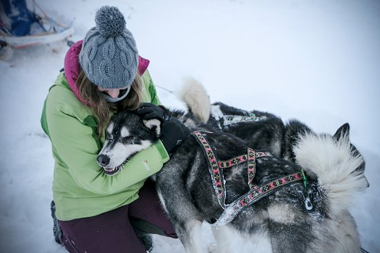 Norwide - Hossan Lomakeskus: Activité Cani-Rando et Traineau à chien