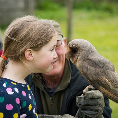The Barn Owl Centre (Gloucester) - 2020 All You Need to ...
