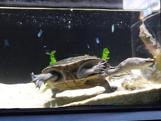 Play Aquarium Bucheon: 사진에 대해 좀 더 자세하게 알려주세요.PLAY AQUARIUM BUCHEON