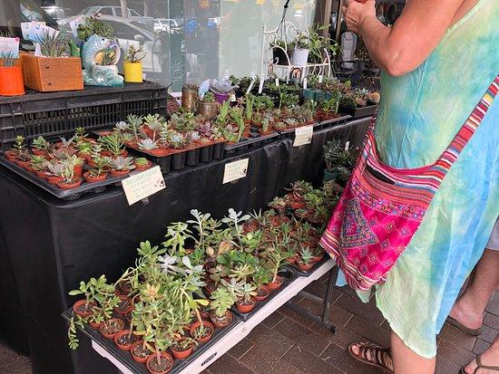 Dubbo Rotunda Market