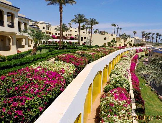 Grand Oasis Resort Resmi