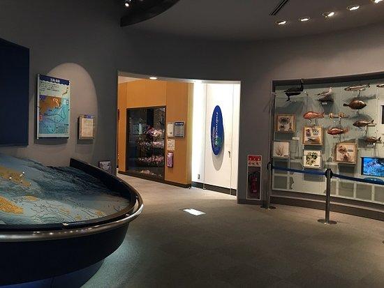 海の博物館 常設展示室