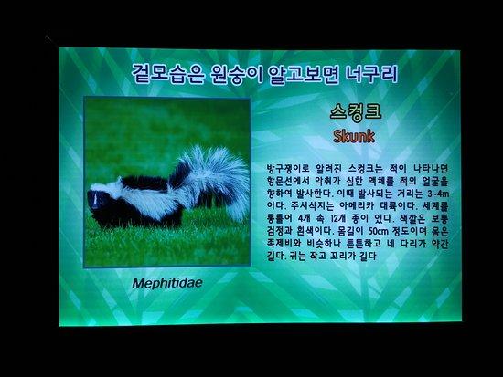 Play Aquarium Bucheon張圖片