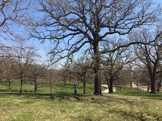 MacRae Park