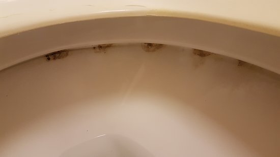 إكستندد ستاي أميركا - تامبا - إيربورت: toilet needs better cleaning
