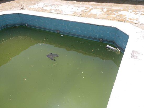Dana Plaza Hotel: be careful of the floating turds