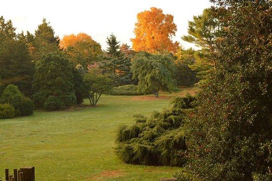 Roy H. DeBoer Evergreen Garden