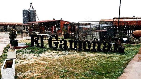 Moralzarzal, España: El Gamonal, desde siempre!!