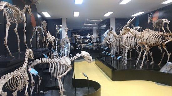 Anatomia Veterinaria Prof. Dr. Plinio Pinto e Silva Museum
