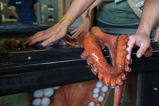 Meet a giant Pacific octopus on one of our many behind the scenes experiences.