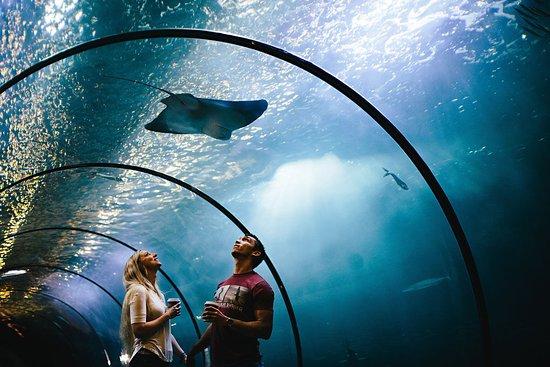 Oregon Coast Aquarium Newport 2020