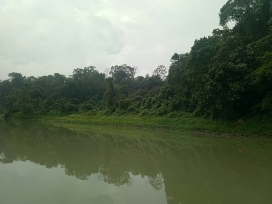 Jeypore Rainforest