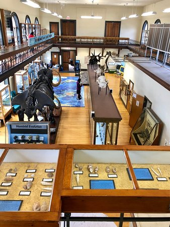 New Brunswick, NJ : The small but mighty Rutgers Geology Museum.