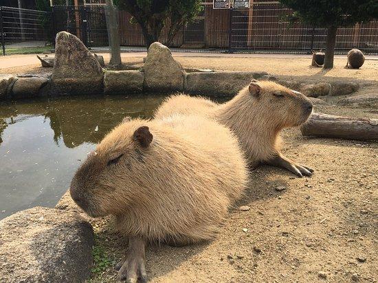 Ako Kaihin Park Dobutsu Fureai Mura