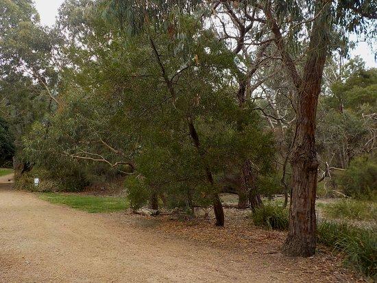 Buckanbe Park: good path