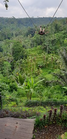 Best of Ubud Tour with Jungle Swing: Jungle swing.