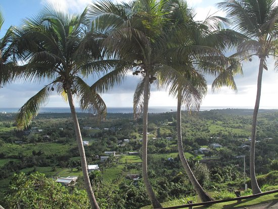 Luquillo Beach Horse Ride from Carabalí Rainforest Adventure Park: View from the hotel!