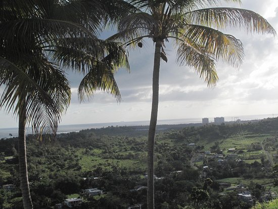 Luquillo Beach Horse Ride from Carabalí Rainforest Adventure Park: View from the hotel