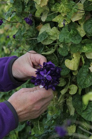 confection du bouquet de violette