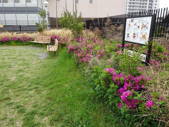 Shinagawa Hanakaido Mizube Hiroba: 水辺広場の花壇