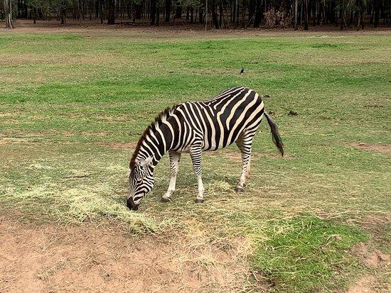 Taronga Western Plains Zoo 사진