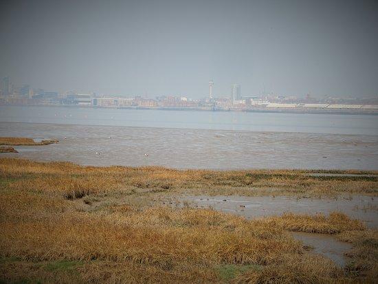 Marsh,River Park.