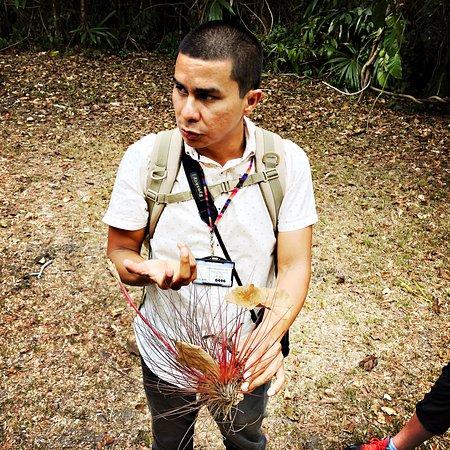 "Marlon Diaz of Gem Trips explaining how air plants ""capture"" falling leaves for fuel."