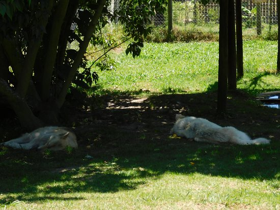 Garden Route Wolf Sanctuary: Wolves