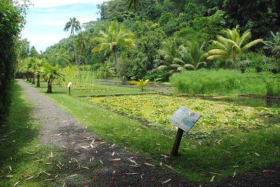 Tahiti Eden Tours: Vaipahi Water garden