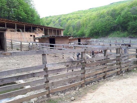 Golubac, Serbia: Manastir Tumane