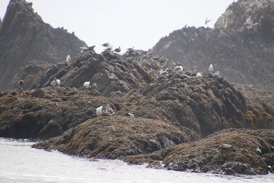 Seal Rock State Park: Lots of birds