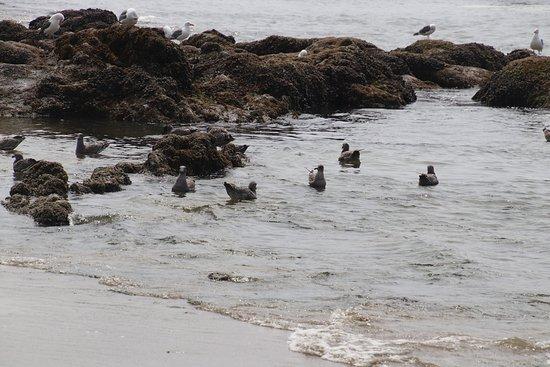Seal Rock State Park: More birds to enjoy