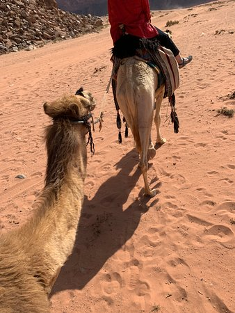 d5ecb492708 MOONROCK CAMP   TOURS - Updated 2019 Prices   Campground Reviews (Wadi Rum