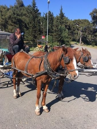 BUYUKADA (1 of the Prince Islands) Horse's is the most common transport in this Island