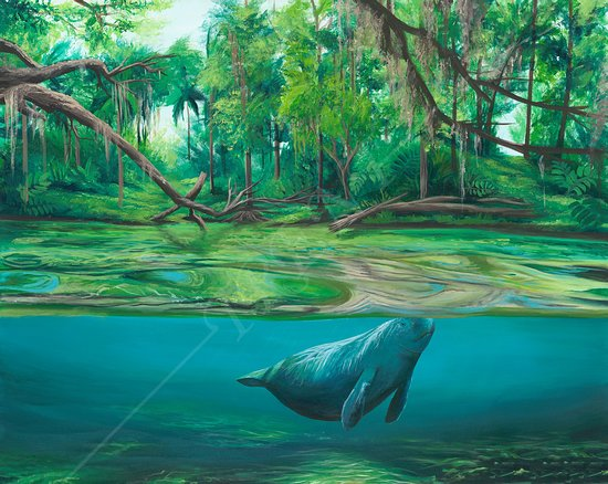 """The Lagoon"" - Part of Kole's awareness series. Trying to bring awareness to the algae blooms in our local water ways! This majestic sea cow (manatee) gracefully floating through a canal."