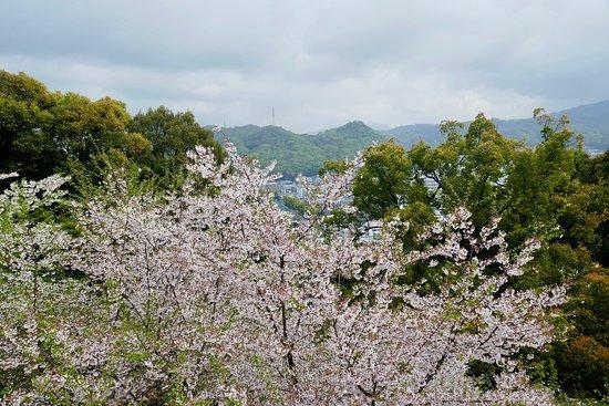 眼下には松山の街並みが広がる