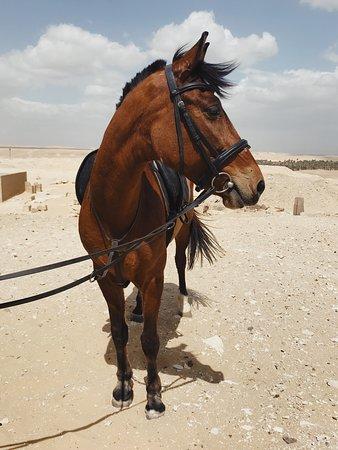 Ride Egypt: Abu Sir ride
