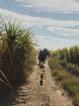 Ride Egypt: Gallops through plantations