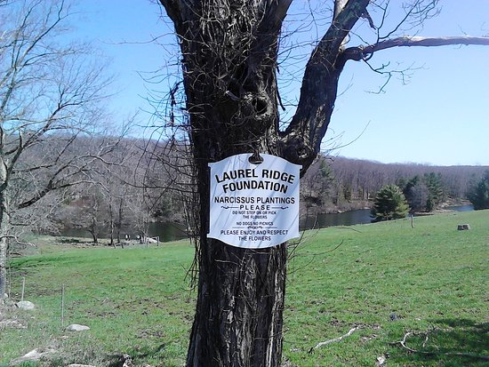 Litchfield, CT: Laurel Ridge Foundation Sign