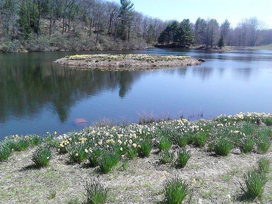Laurel Ridge Farm: Daffodil Island