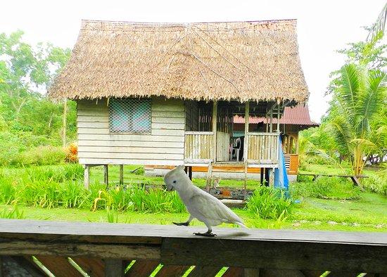 Guadalcanal Island, Islas Salomón: Tavu the Cockatoo