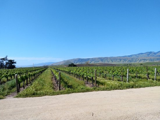 Biddle Ranch Vineyard San Luis Obispo 2020 All You Need To Know Before You Go With Photos Tripadvisor