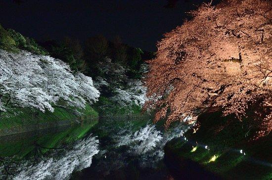 千鳥淵(2019/04/04夜)