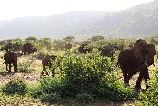 kilimanjarodreamadventures: Elephant in Tarangire national parks.