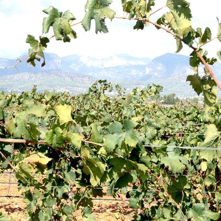 Sa Clasta wine tours