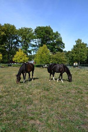 Pferdeweide für einen Zwischenstopp oder einen Urlaub per Pferd