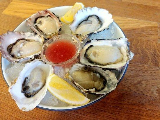 NZ Oyster